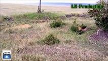 Biggest wild animal fights | CRAZIEST Animals Attack Caught | Crazy animal attack, funny animals #1