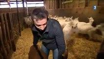 Jérôme Clochard et Douce, la star du salon de l'agriculture 2013, dans France 3 Poitou Charentes