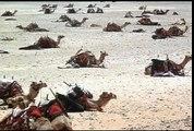 Lawrence da Arábia (Lawrence of Arabia, 1962)