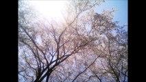 国際基督教高等学校校歌 (ICUHS) 合唱&管弦楽伴奏版、International Christian University High School Song  (Tokyo,Japan)