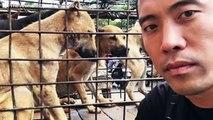 Yulin - Sauvetage de 1000 chiens destinés à l'abattoir