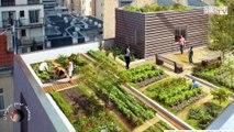 [ Citoyens pour Demain #2 ] Des tomates sur les toits
