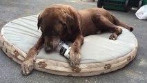 Ce chien trouve comment sortir les croquettes de la bouteille... Smart le toutou