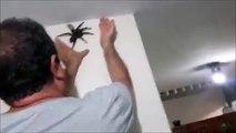 Cet homme va-t-il réussir à attraper une énorme mygale rentrée chez lui ?