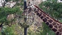 Zoológico de Buenos Aires vai virar parque ecológico