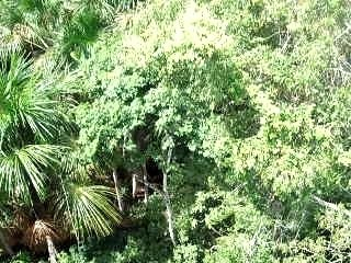 Panorama-jungle