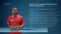 WizitUp eLearning: Biology-Endocrine Coordination in Plants-Plant Hormones (025/25)