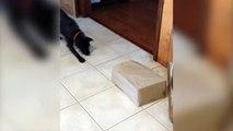Mais pourquoi ce chien guette le carton???