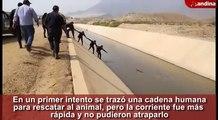Des policiers forment une chaîne humaine pour sauver un chien d'un canal.