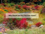 Reasons People Buy YouTube Views, Likes and Subscribers
