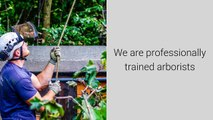 Tree Surgeons Beeston Nottingham - Tel 07905 675 171 - Tree Surgeons in Nottingham