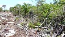 Grand Belizean Estates - Ambergris Caye, Belize (Clip 2 of 3) August 25 2009