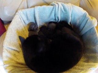Time Lapse - Acceléré du 1er mois de chatons  - Kitten TimeLapse