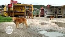 Chile: algas tóxicas en Chiloé | Global 3000