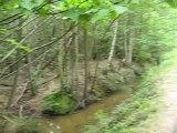 Vue de forêt comme en Amazonie (94 - 15/07/07)