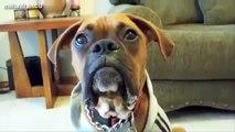Funny Talking Dogs Compilation 2014 - Talking Dog Videos