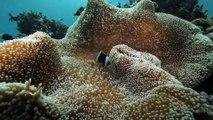 """La Minute du Parc naturel marin de Mayotte - """"Un Parc naturel marin, pourquoi ?"""" - Shimaoré"""