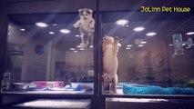 Vous penserez que ce chaton cherche à s'échapper,.. Mais ce qu'il fait va vous impressionner. Trop mignon !