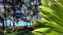 Ile aux Cerfs | Holiday on Mauritius