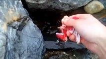 Feeding eels - Hawea river, New Zealand