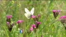 """Les """"Pages nature"""" de Cécile Gauthier : du 2 juillet au 4 septembre sur France 3 Limousin"""