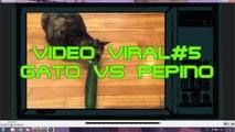 VIDEO VIRAL#5,videos virales, videos de caidas, videos chistosos,videos de risa, videos de humor,videos graciosos,videos mas vistos, funny videos,videos de bromas,videos insoliyos,fallen videos,viral videos,videos of jokes,Most seen,top 10