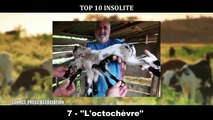10 ANIMAUX avec des MUTATIONS GÉNÉTIQUES EXTRAORDINAIRE !!! INCROYABLES Mutations Très RARE