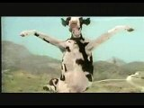 Three cows   Movie CLIP   Funny Clip   Funny Animal