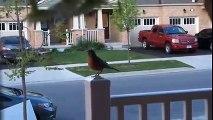 Une famille a filmé l'éclosion et les premiers jours d'oiseaux dans leur nid