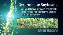 Farm Basics #845 - Soybean Flowering (Air Date 6/15/14)