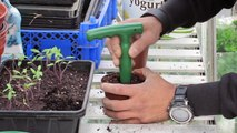 EP13 Transplanting Tomatoes & Sowing Runner Beans