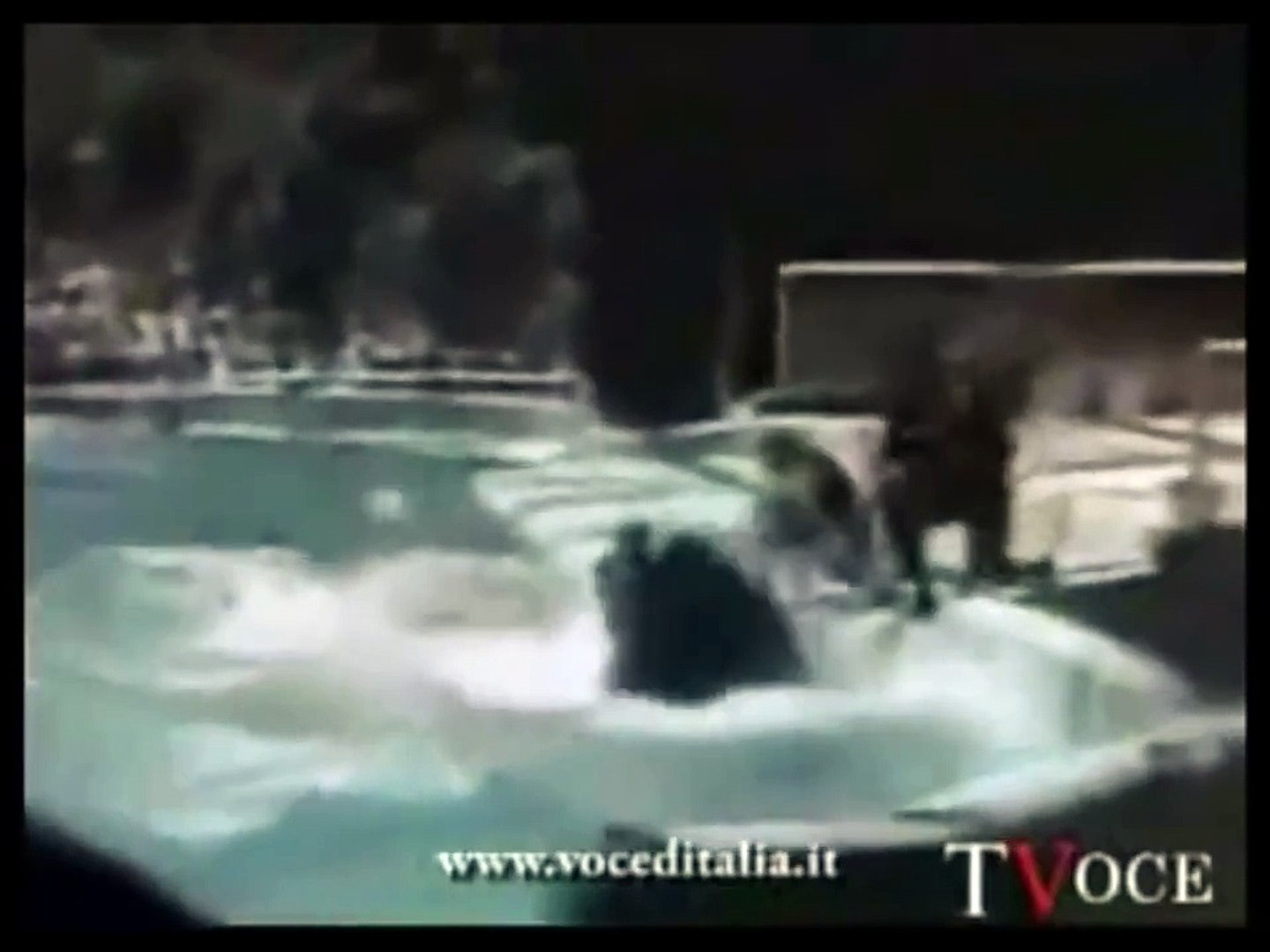 ACTUAL FOOTAGE ~ KILLER WHALES mangle 1 trainer & nearly kills another  ORCAS ORCA at SeaWorld