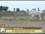 58º LEILÃO VIRTUAL MB LEILÕES - CORTE - (26/06/2016) - LOTE 15