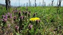 サントリー日本ワイン『登美の丘ワイナリーシリーズ』 3分23秒 サントリー