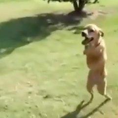 Un chien presque comme les autres