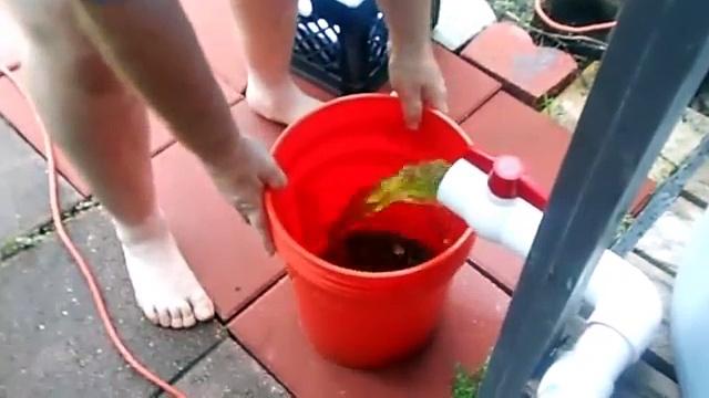 Backyard Aquaponics #2