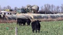 Farm Basics #768 - Corn Stalk Uses (Air Date 12/23/12)