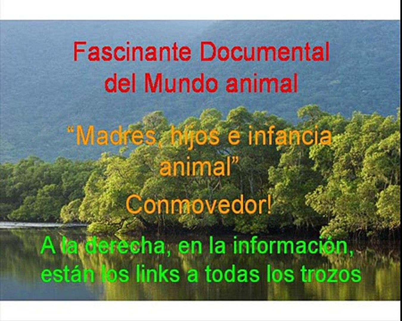 Documental. Cabras Homenaje a las madres del mundo animal 15/17