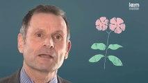 Témoignage visage - Bruno, Chercheur en botanique (Pierre Fabre)