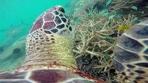"""La Minute du Parc naturel marin de Mayotte - """"Menaces sur les tortues marines ?"""""""