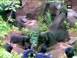 Un bébé éléphant tente de réveiller sa maman morte