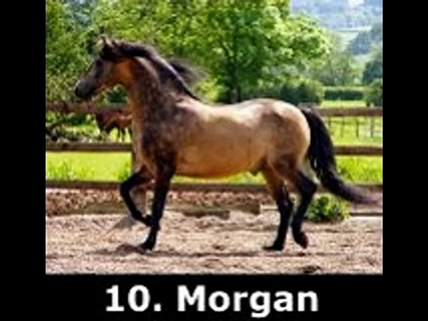Top 10 Prettiest Horse Breeds Video Dailymotion