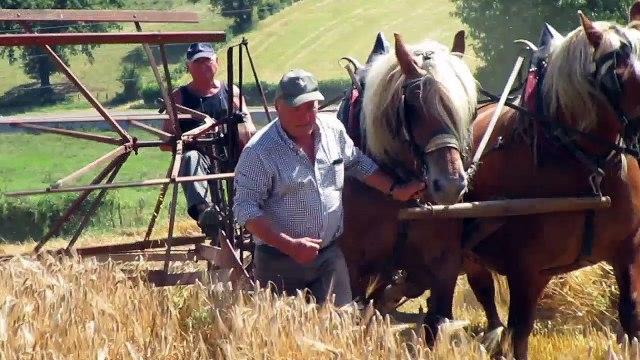 moissonneus lieuse tirée par des chevaux