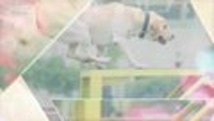 【HD】2016警花与警犬第七集 公安刑警 于和伟、侯梦莎、黄梦莹主演