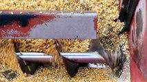 Acest SUPER utilaj este spaima lanurilor de porumb și grâu. Doar stai să-l vezi când se înfige în ele!