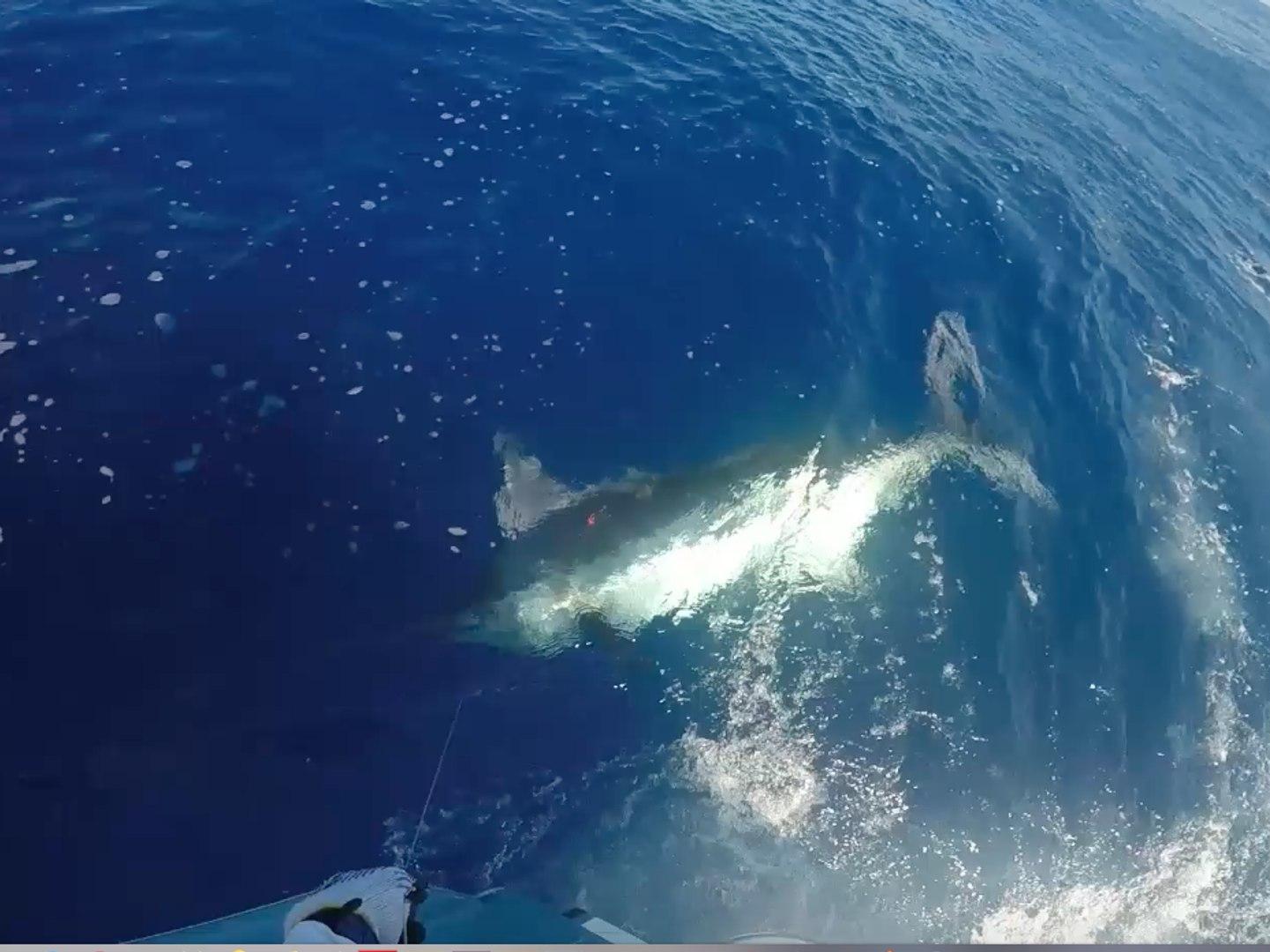 Breathe Easy's Video Recap of the Mississippi Gulf Coast Billfish Classic