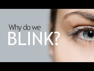 Why Do We Blink?