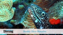 World's Best Diving: Buddy Dive Bonaire and Dominica Madness