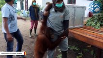A Group Of Humans Went On Grueling 48-Hour Journey To Release Orangutans Back Into Wild