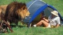 هجمات, الحيوانات, البرية ضد البشر - Attacks animals w